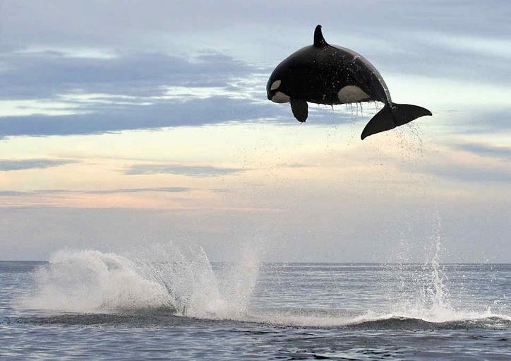 ballenas impresionantes 19