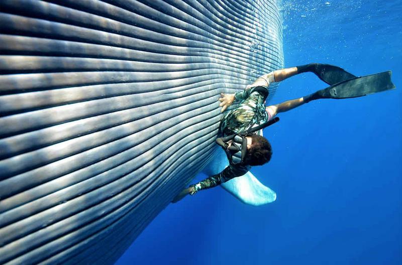 ballenas impresionantes 3
