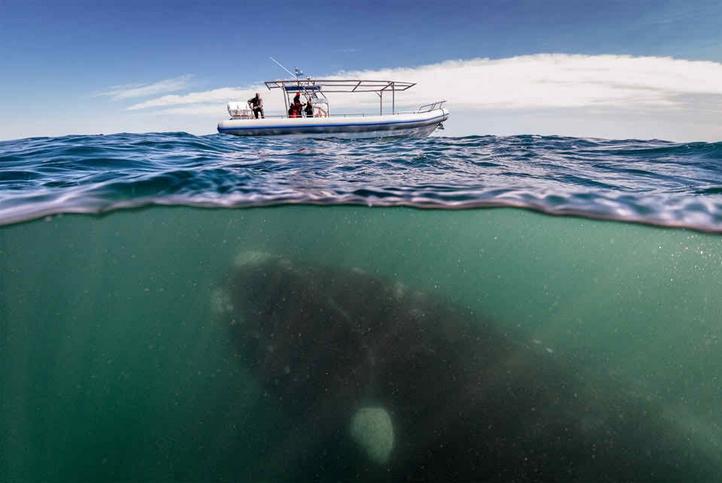 ballenas impresionantes 6