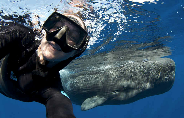 ballenas impresionantes 7