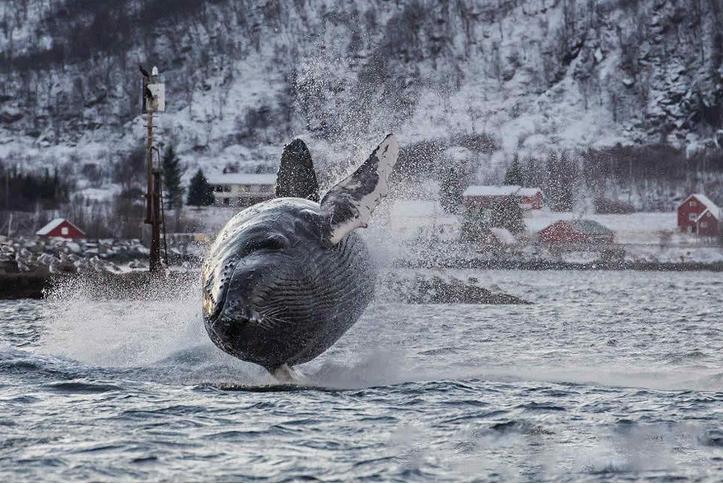 ballenas impresionantes 9