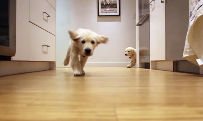 cachorros-time-lapse