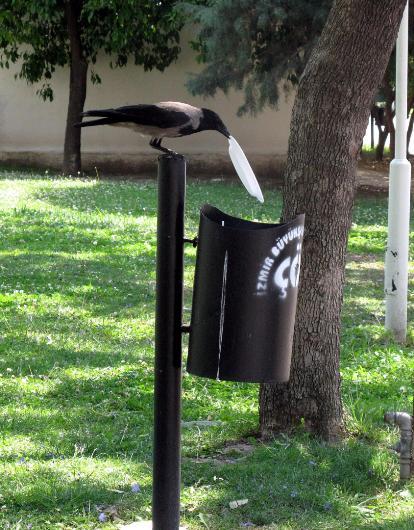 cuervo concienciado 4