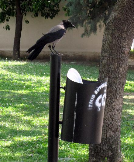 cuervo concienciado 5