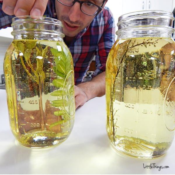 fotos en aceite 4
