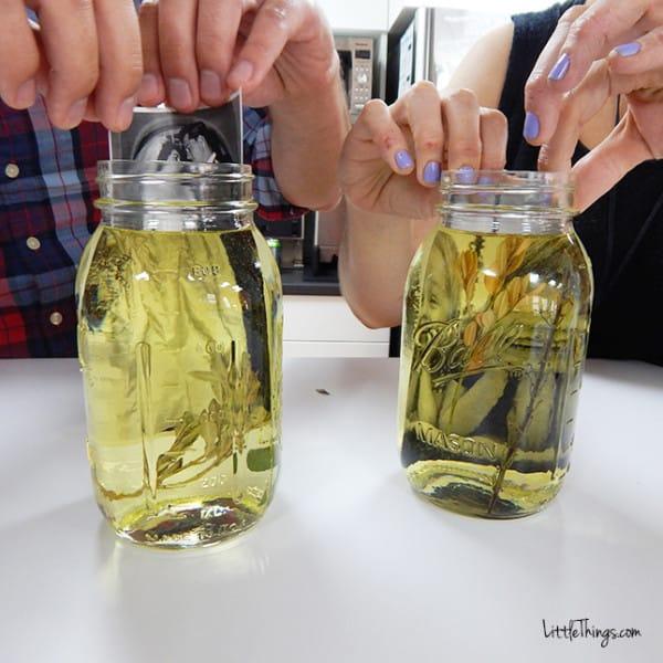 fotos en aceite 6