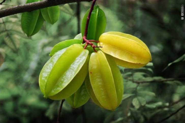 frutas raras 20