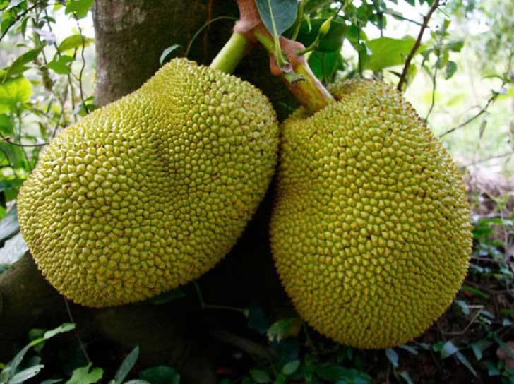 frutas raras 4