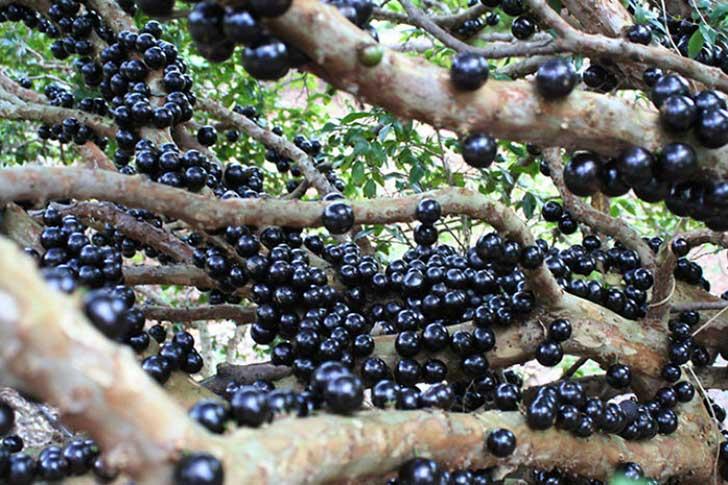 frutas raras 6