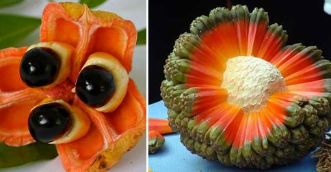 frutas-raras