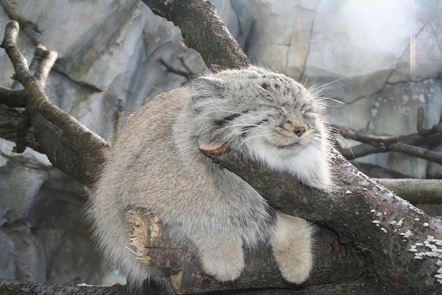 gato expresivo 1