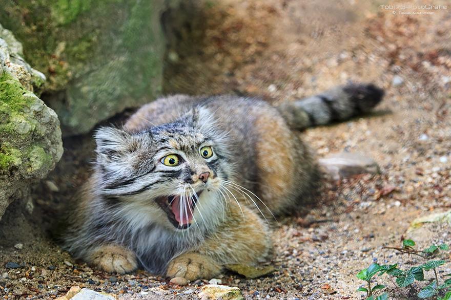 gato expresivo 11