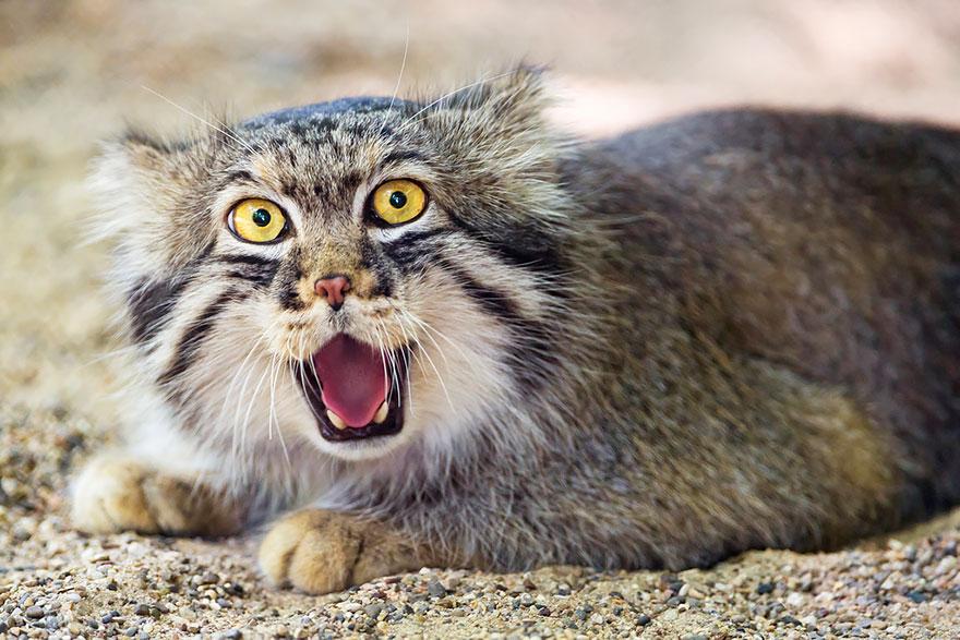 gato expresivo 12