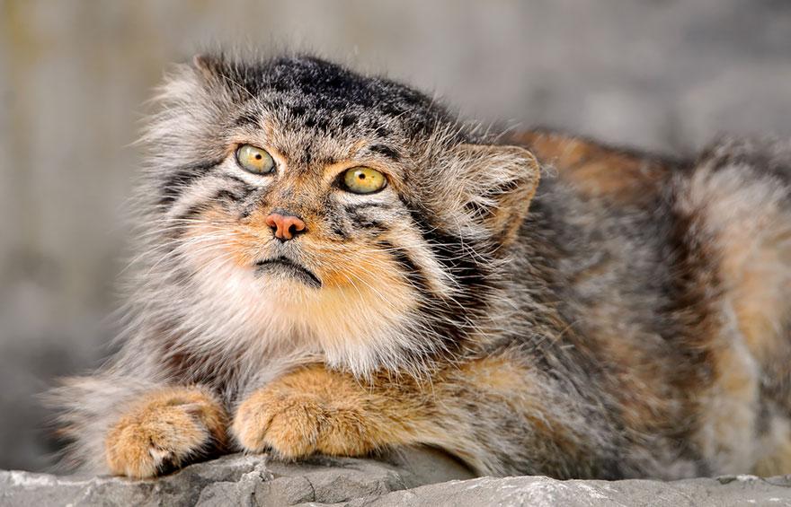 gato expresivo 13