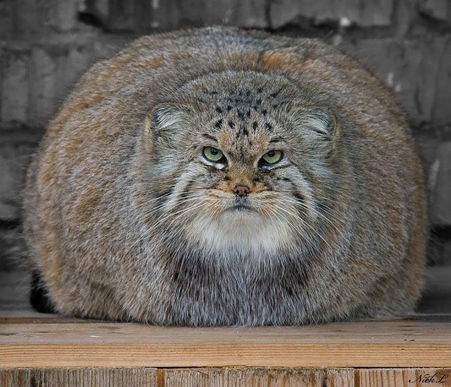 gato expresivo 15
