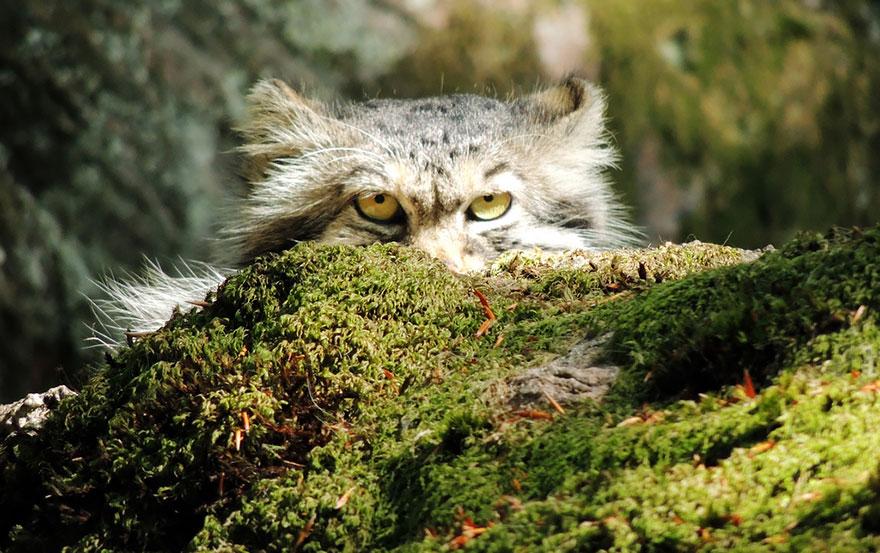 gato expresivo 16