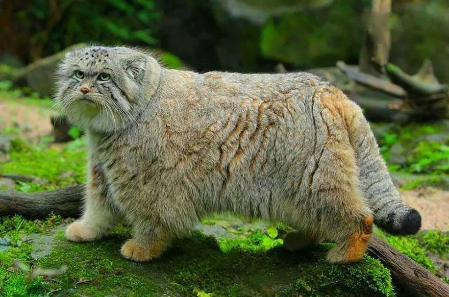 gato expresivo 17