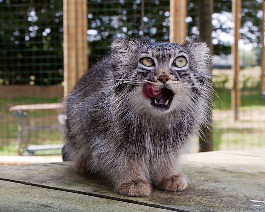 gato expresivo 18