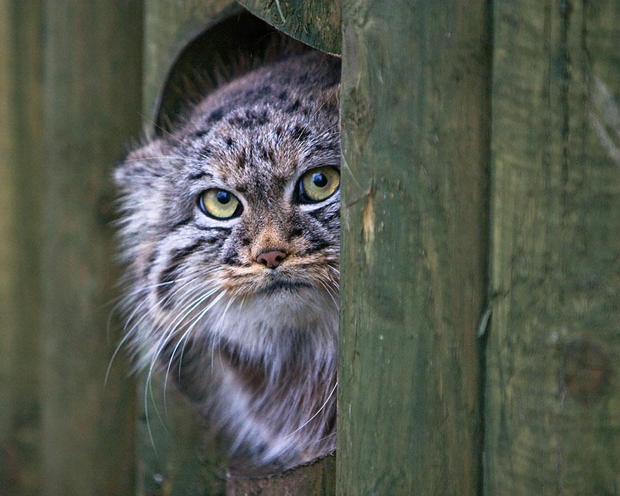 gato expresivo 19