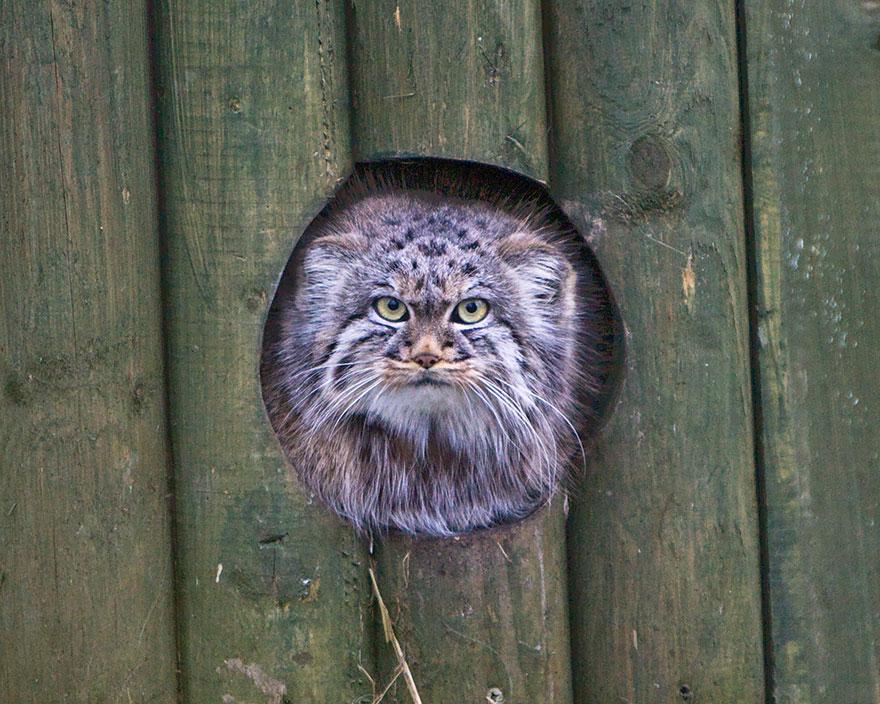 gato expresivo 21