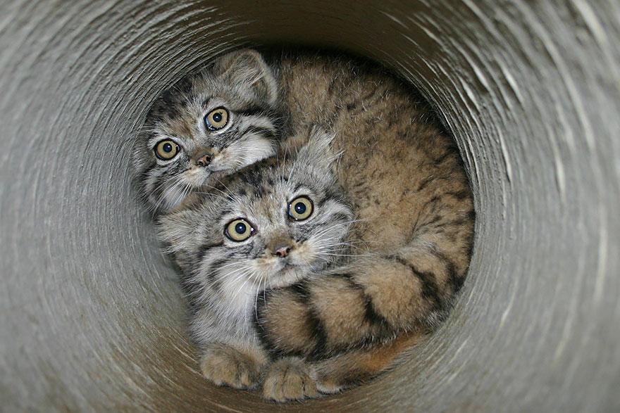 gato expresivo 3