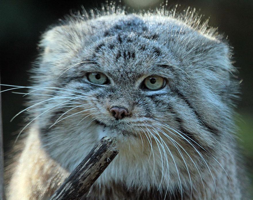 gato expresivo 4