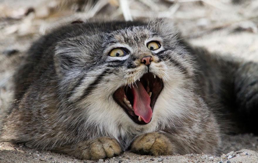 gato expresivo 7