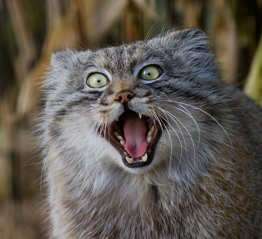gato expresivo 8