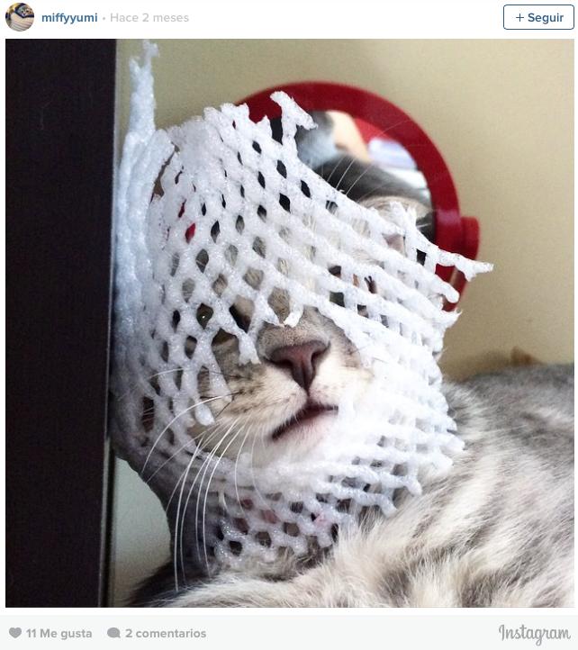 gatos en problemas 10