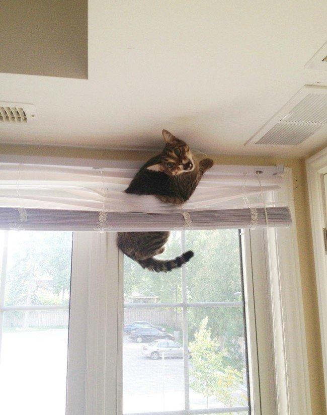 gatos en problemas 13
