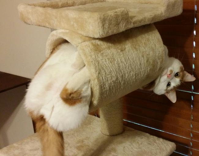 gatos en problemas 5