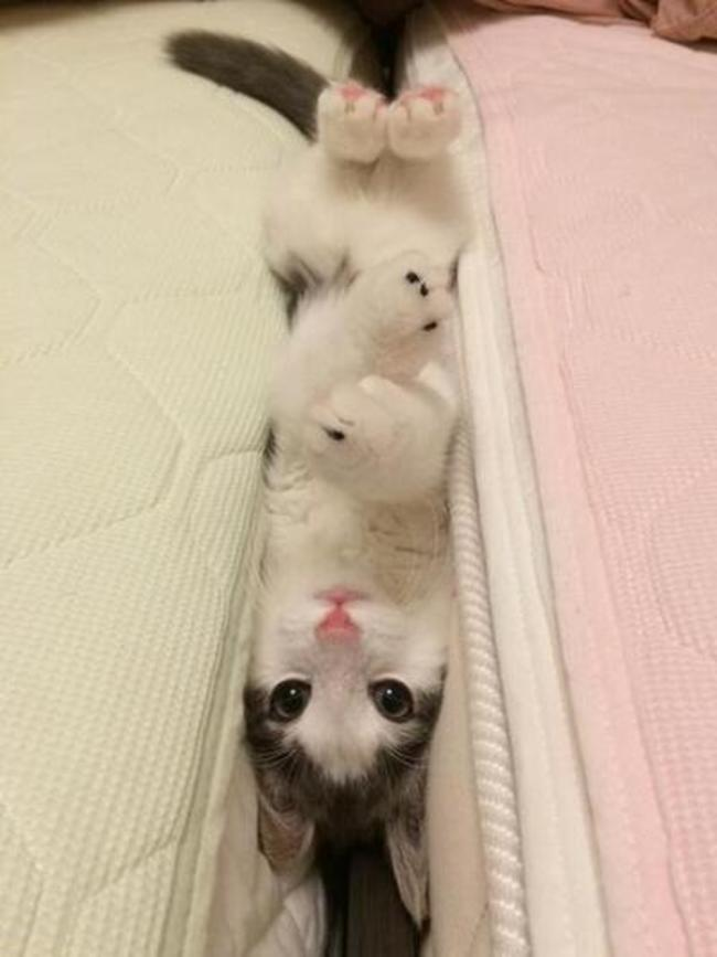 gatos en problemas 6