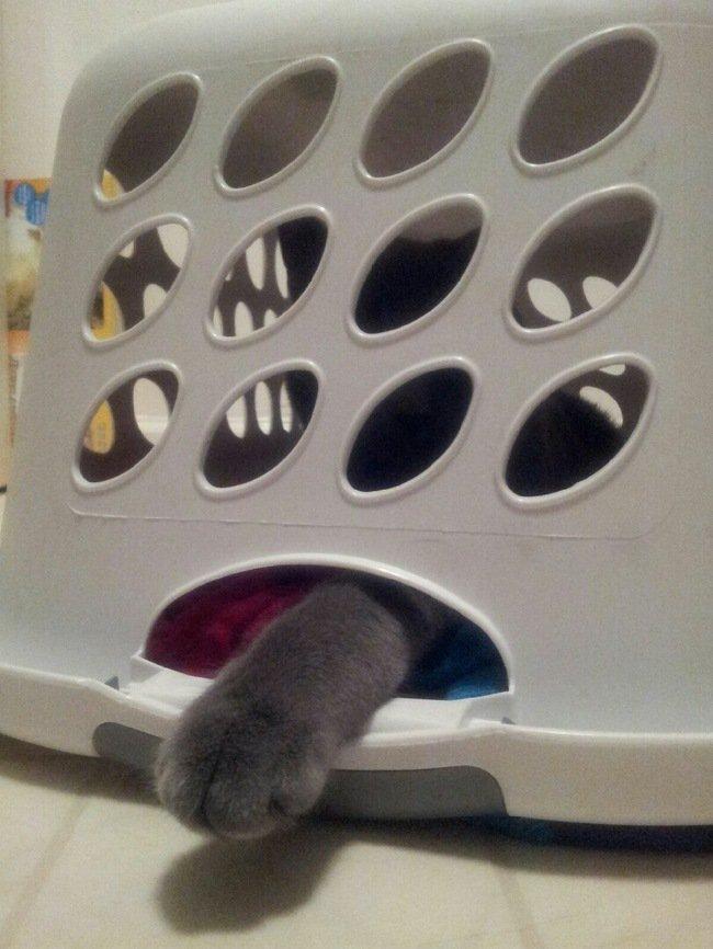 gatos en problemas 7