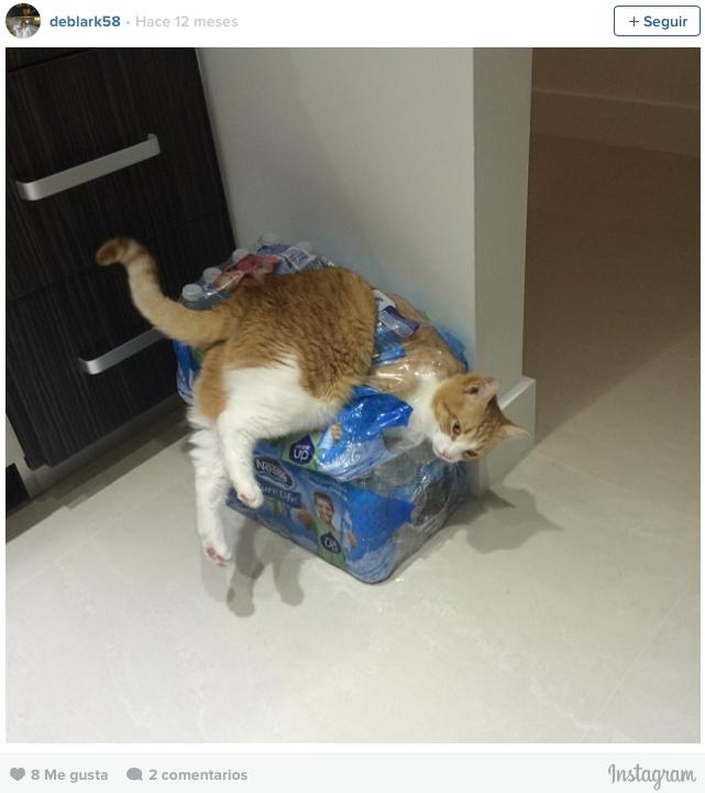 gatos en problemas 8