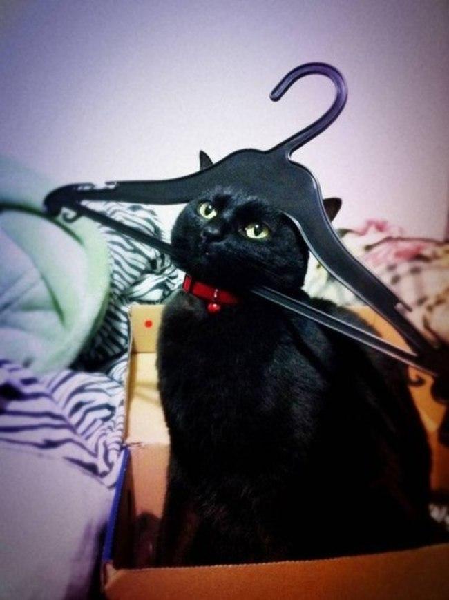 gatos en problemas 9
