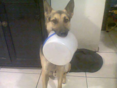 perros policia comida 2