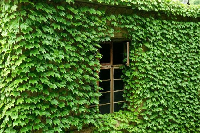 pueblo verde 4