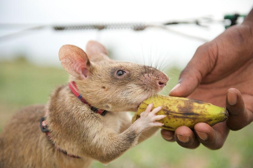 ratas y minas 7