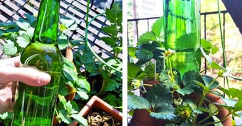 trucos-plantas