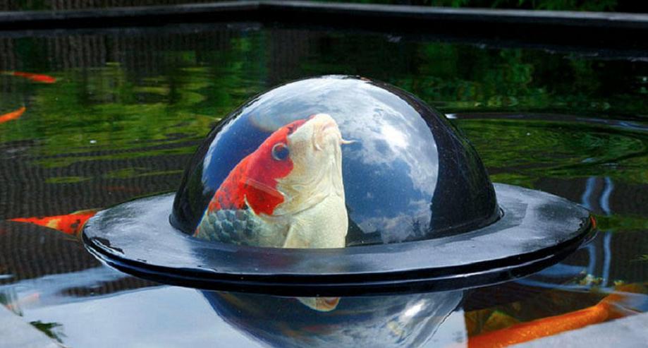 ventana-peces