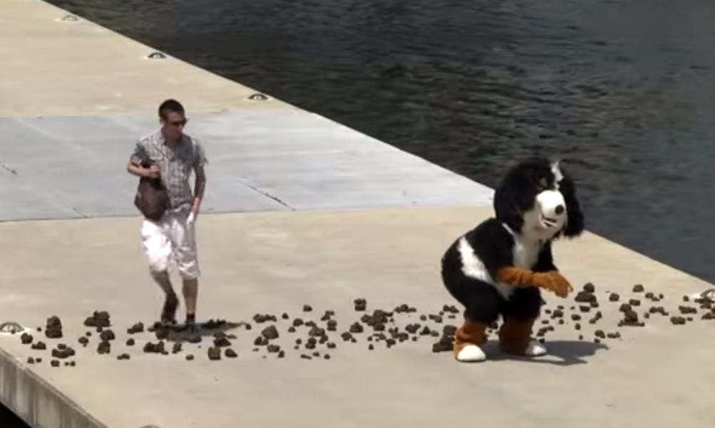 video-perro