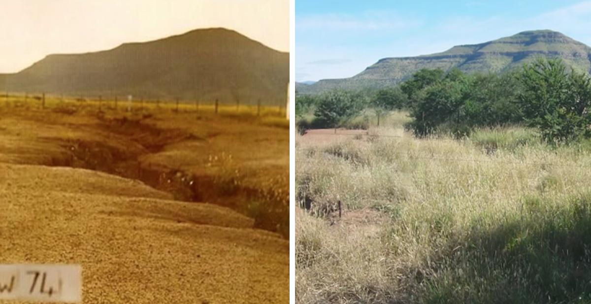 acabar con la desertizacion