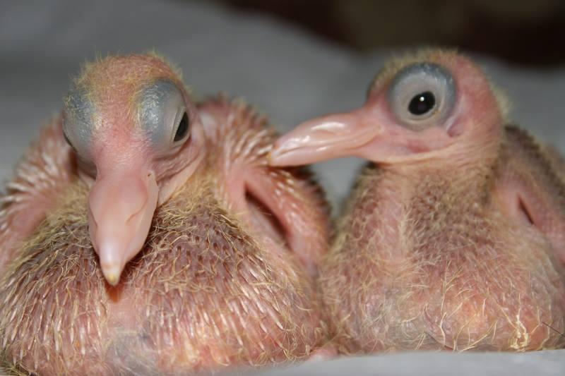 animales bebe 2