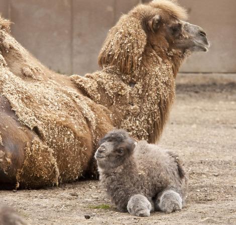 animales bebe 20
