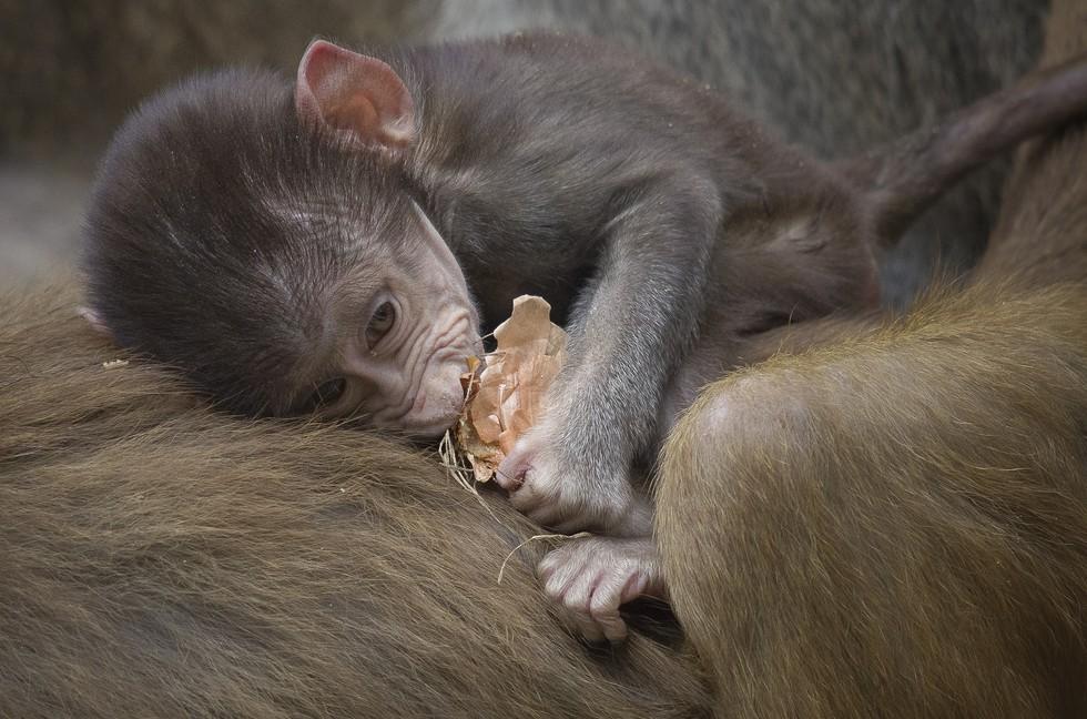 animales bebe 6