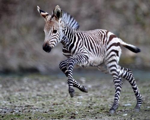 animales bebe 8