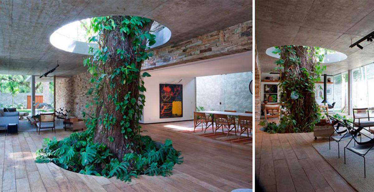 arquitectos que respetan los arboles