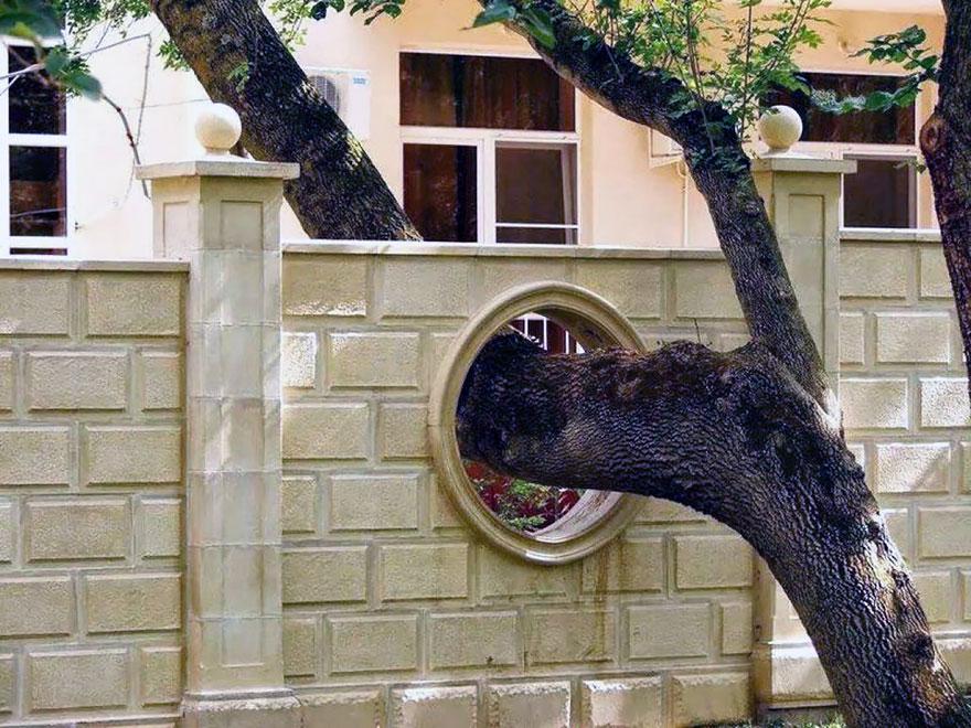 casa que respetan los arboles 7