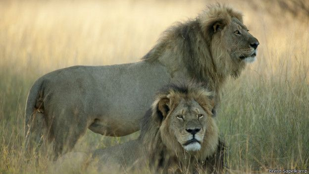 cecil el leon 3