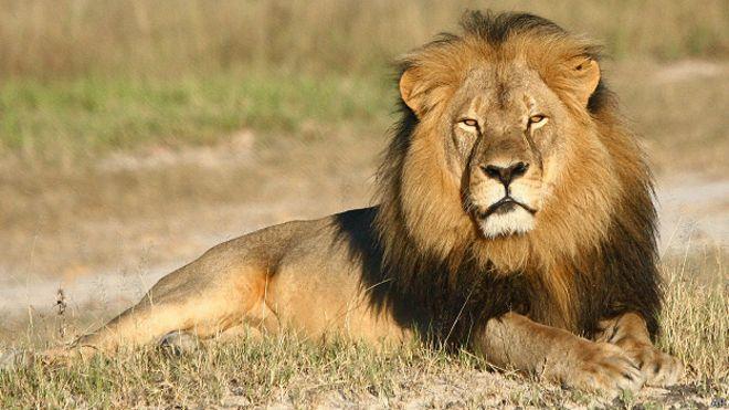 cecil el leon 4